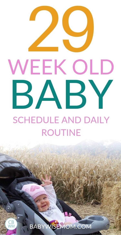 29 week old baby schedule Pinnable Image
