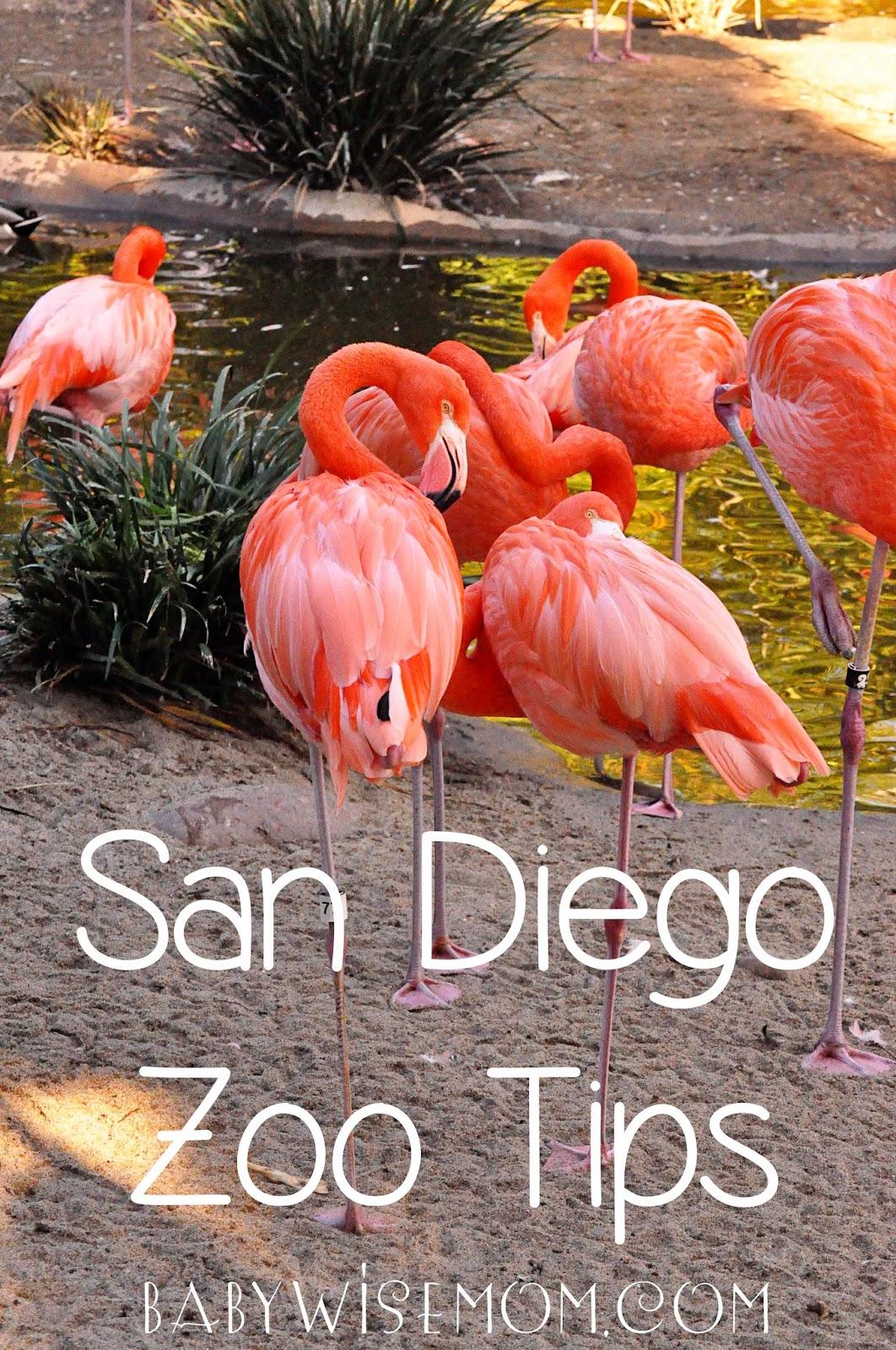 San Diego Zoo Tips
