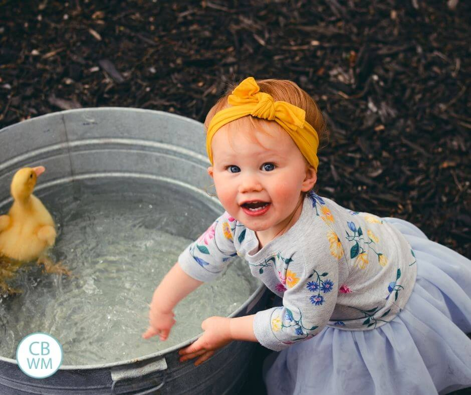 Toddler playing in the water basin with ducklings floating in it