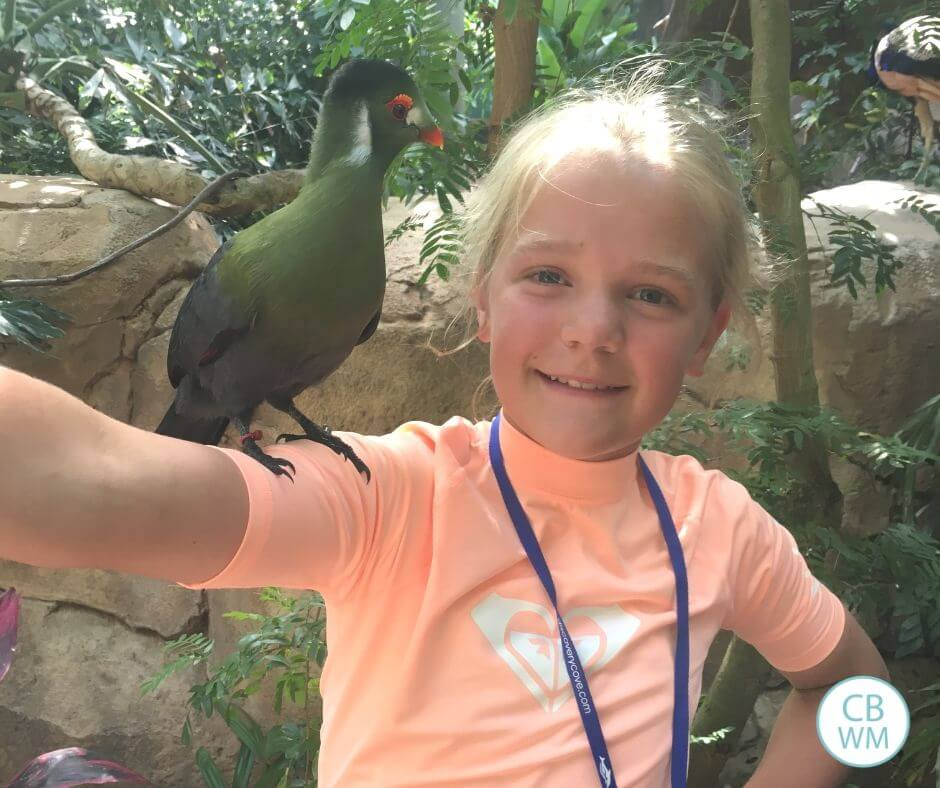 Aviary at Discovery Cove